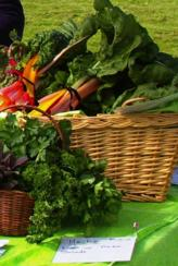 Leafy Vegetables, North Canterbury Food & Wine Trail